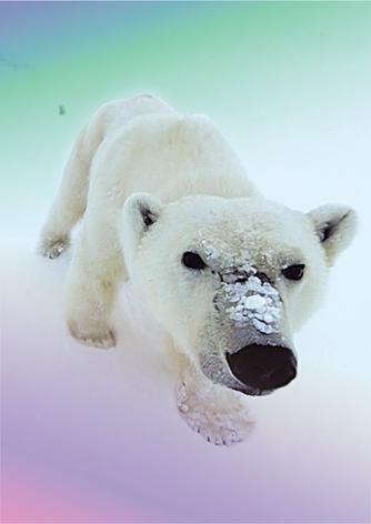 Multikino VR: Wyprawa na Arktykę