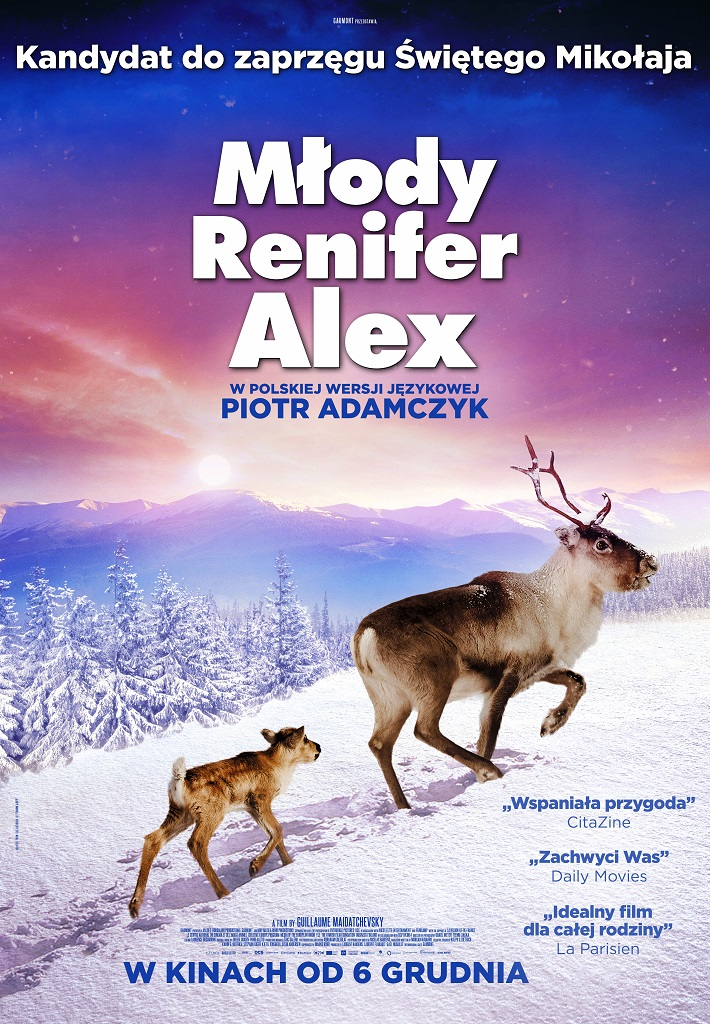 Młody renifer Alex