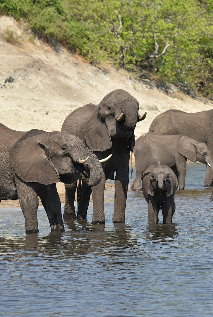 Multikino VR: Elephants On The Brink